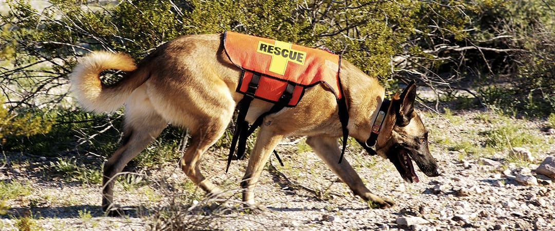TRSAR Search Dog